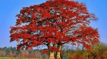 纳尼?大树理论是什么鬼?