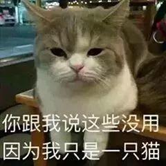 赵丽颖冯绍峰组团洒狗粮 时尚教主结婚造型仙气十足